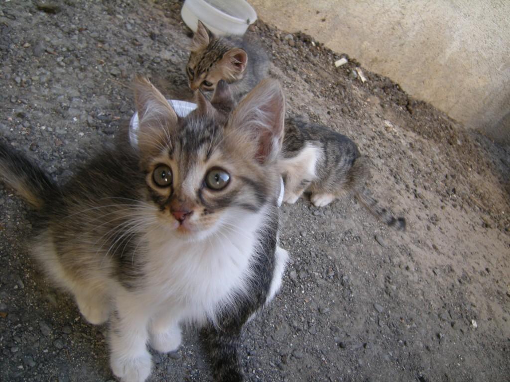 Nicosia, Lefkosia, Street cat, kitten, cat pictures
